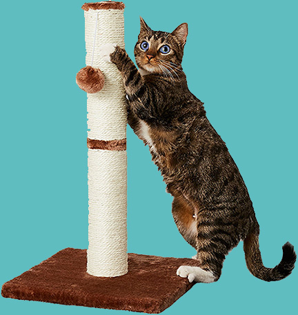 KittyKat Scratching Post with toy
