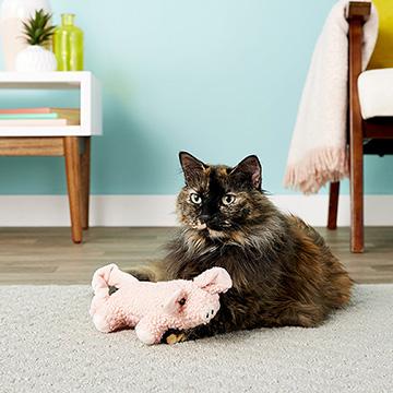 Snagable Pig Kicker Cat Toy